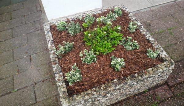 Neubepflanzung Blumenkübel