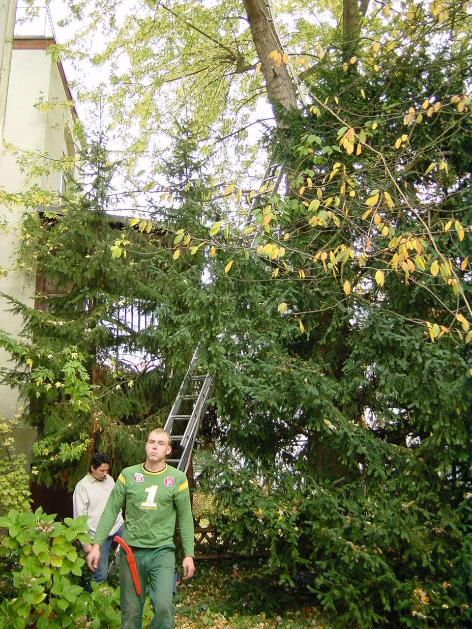 Baumfällung mit Abseilsystem Bad Oeynhausen