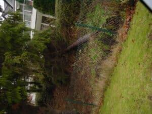 Sturmschaden Beseitigung von Bäumen in Bad Oenyhausen