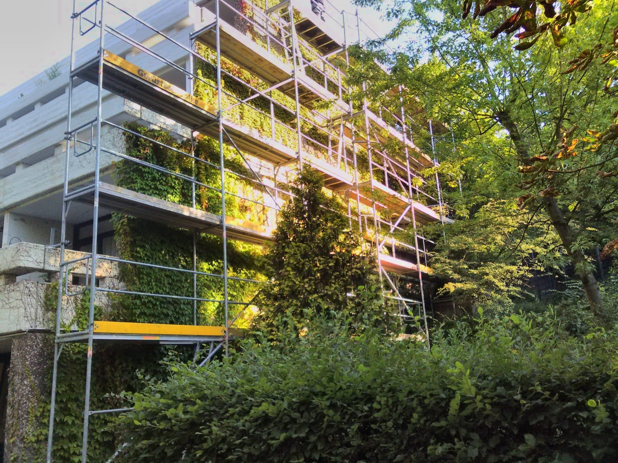 Efeu Beseitigung Bad Oeynhausen