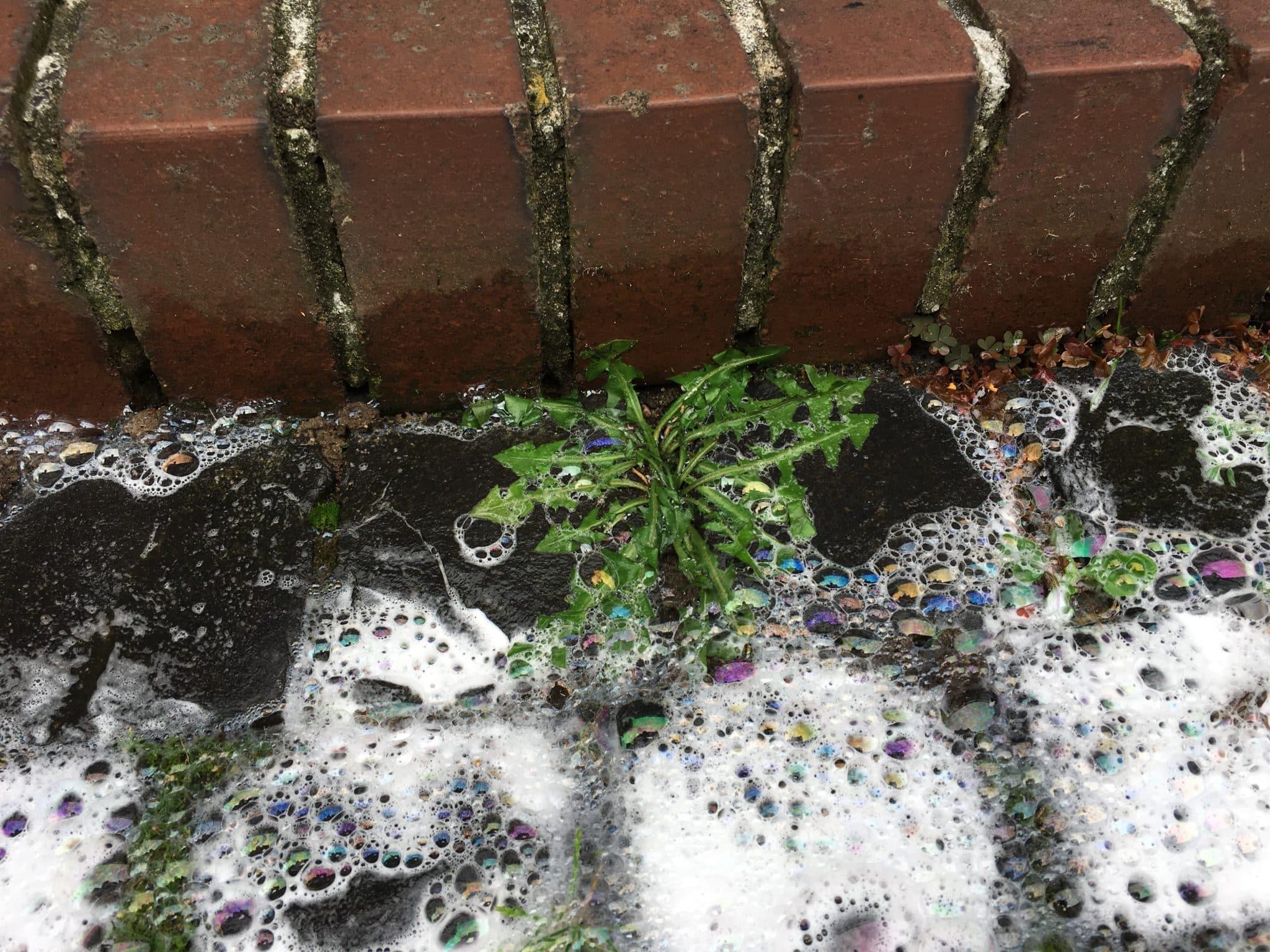 unkrautbeseitigung mit Heißwasserschaum