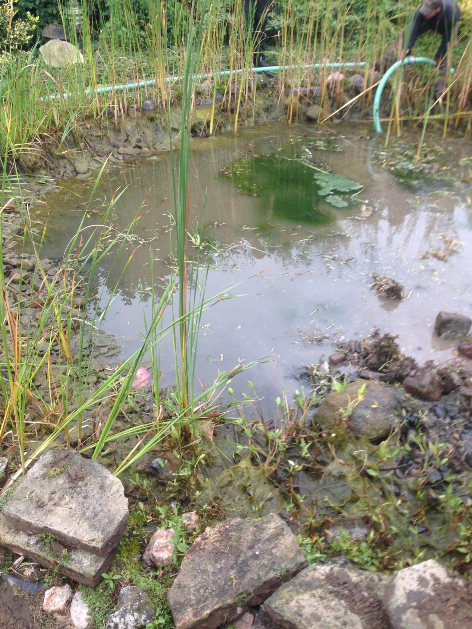 Rückbau von Teichanlagen Voltho