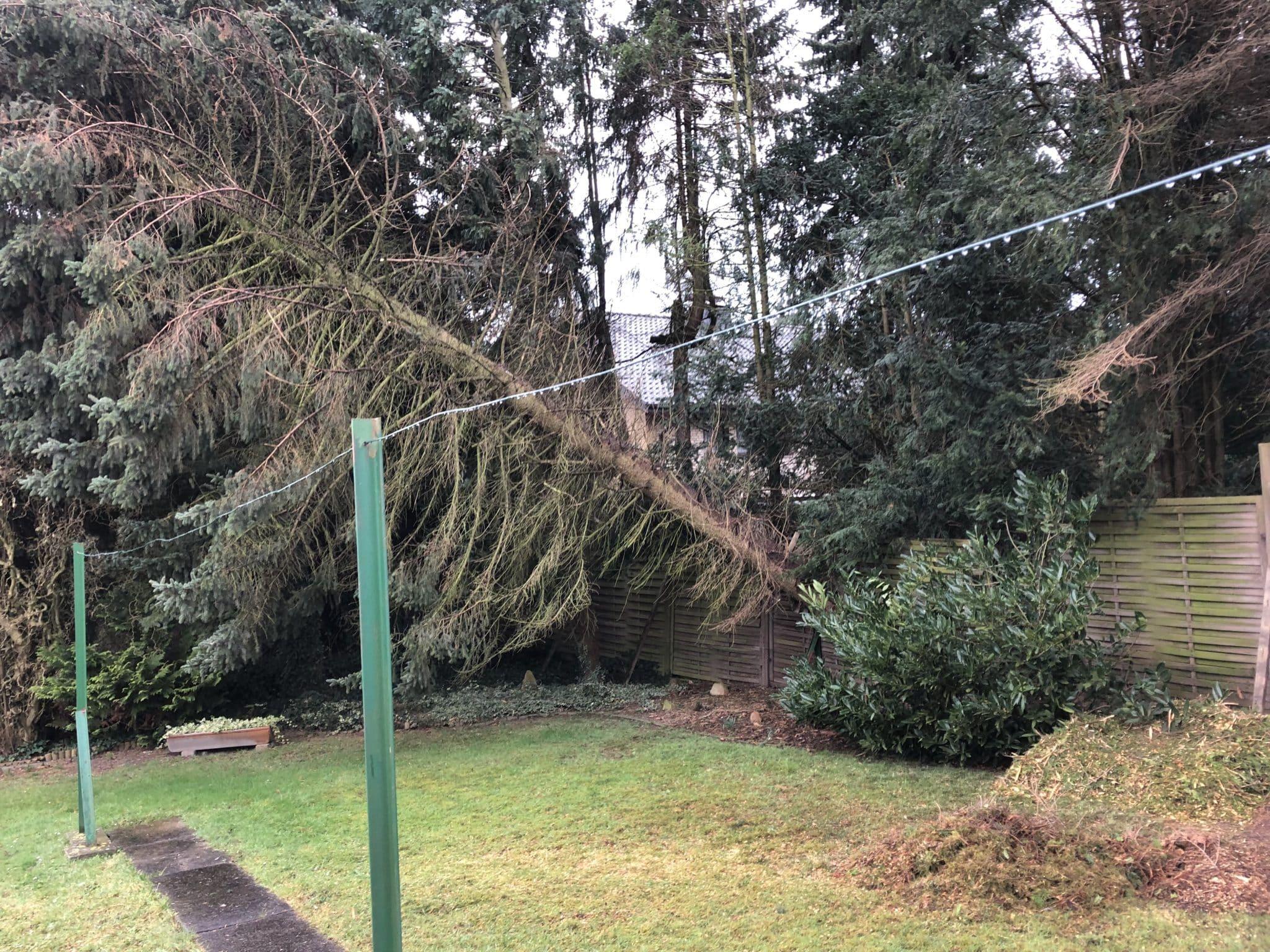 Baumfällung nach Sturmschaden Bad Oeynhausen