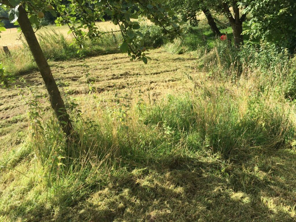 Mulchen unter Bäumen in Bad Oeynhausen