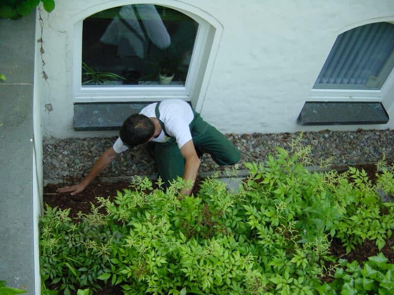 Rindenmulch für Beete in Bad Oeynhausen