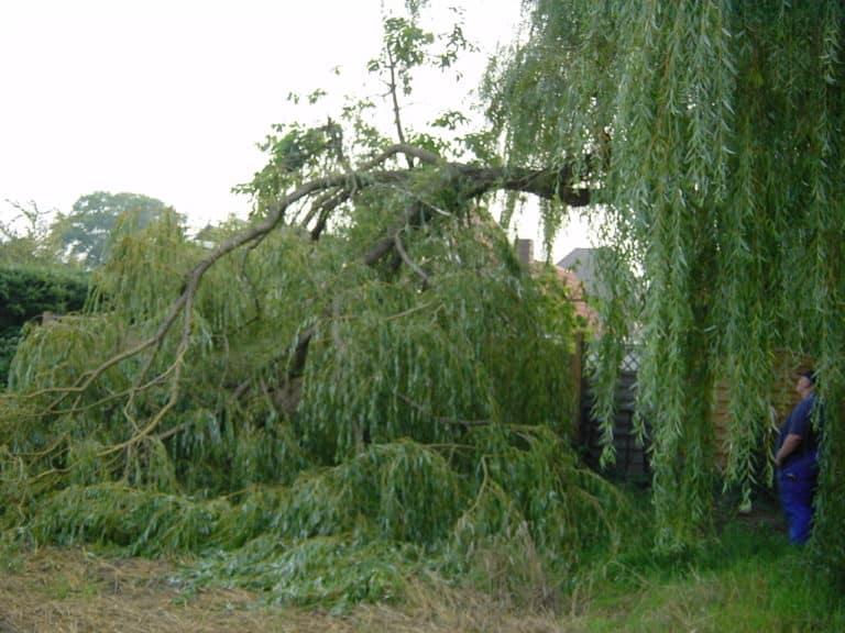 Sturmbruch beseitigen in Bad Oeynhausen