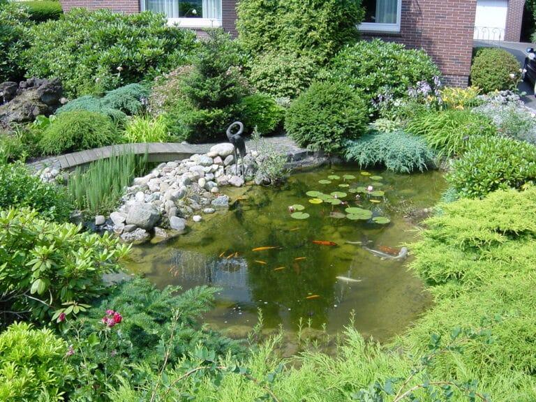 Teichpflege in Bad Oeynhausen
