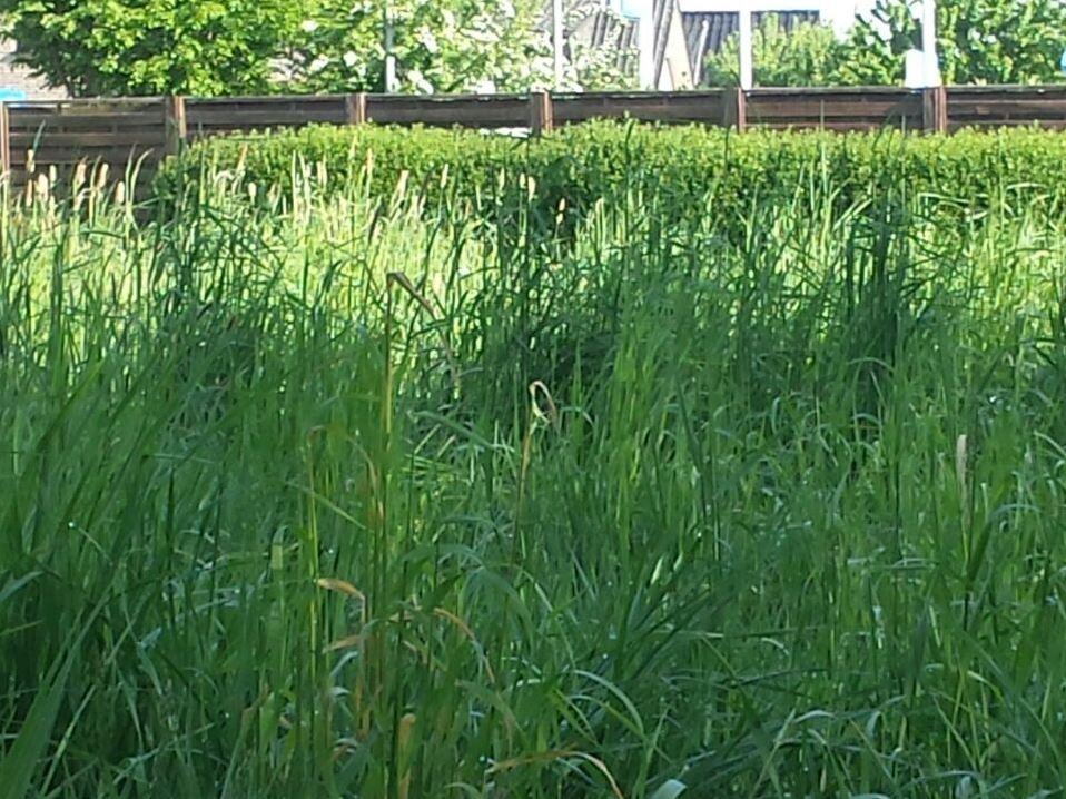 Wiesen mulchen mit Radlader Bad Oeynhausen