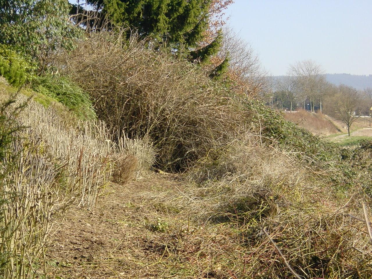 Rückschnitt auf den Stoch in Bad Oeynhausen