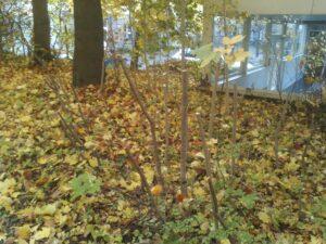 Laubbeseitigung an Gewerbeobjekten Bad Oeynhausen