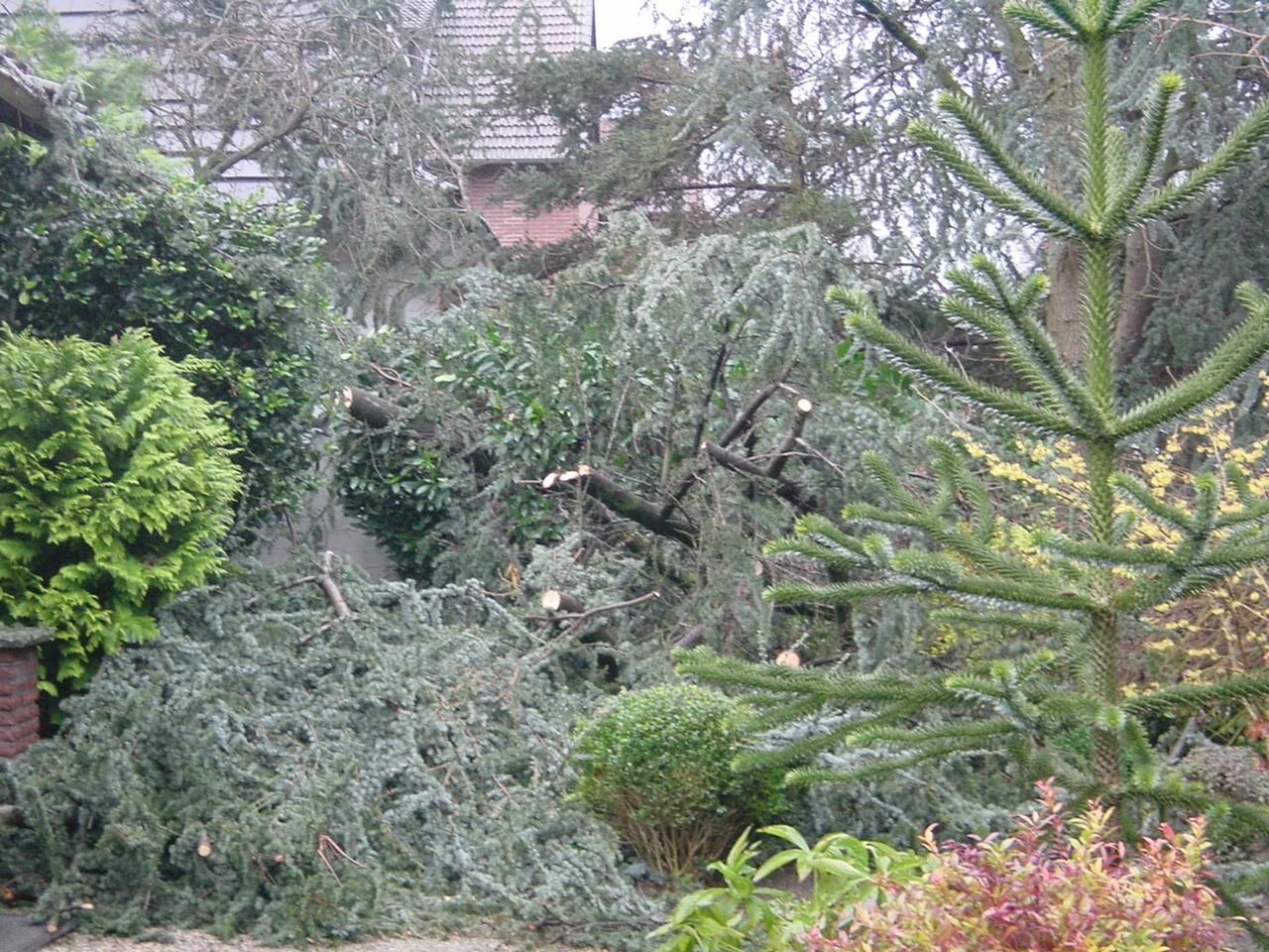 Sturmschadenbeseitigung in Gartenanlagen in Bad Oeynhausen