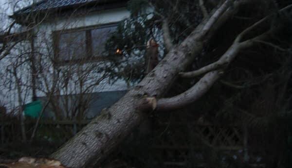 vSturmschadenbeseitigung in Gartenanlagen in Bad Oeynhausen